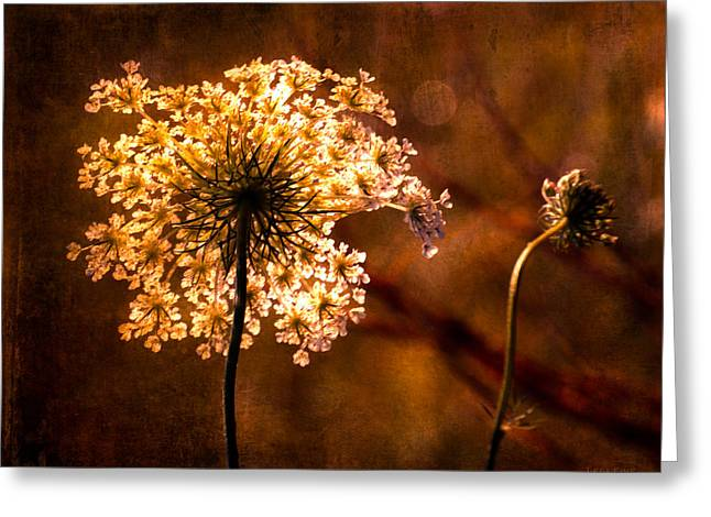 Queen Annes Lace Vintage Greeting Card