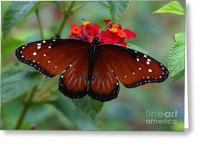 Queen Butterfly Greeting Card by Marty Fancy