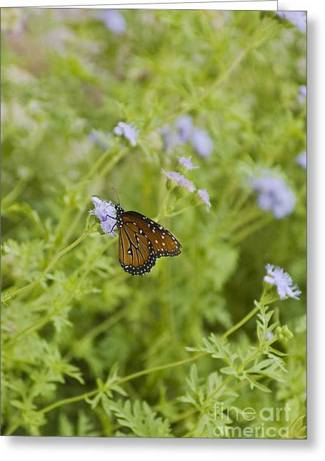Queen Butterfly Greeting Card by Richard and Ellen Thane