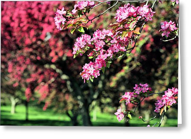 Queens Botanical Garden Greeting Card by JC Findley