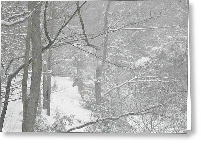 Querida In The Snow Storm Greeting Card by Patricia Keller