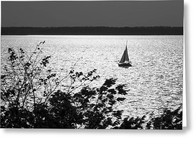 Quick Silver - Sailboat On Lake Barkley Greeting Card by Jane Eleanor Nicholas