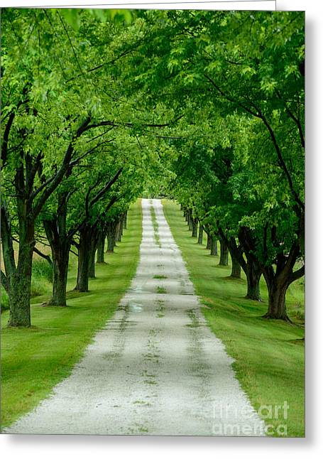 Quiet Path Between Trees Greeting Card