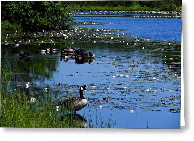 Quiet Reflections Greeting Card by Allen Beilschmidt