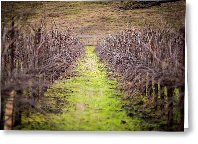 Quiet Vineyard Greeting Card