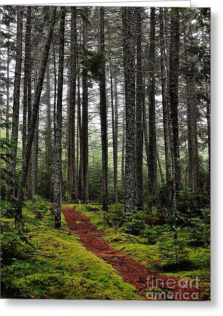 Quiet Woods Greeting Card
