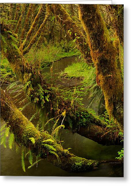 Quinault Rain Forest Greeting Card