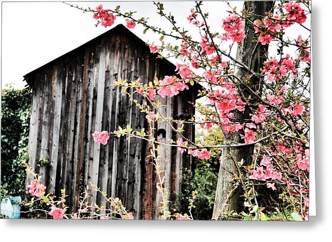 Quince Dreams Greeting Card