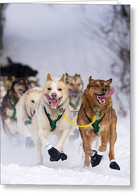 Quinn Iten Lead Dogs Running On Long Greeting Card by Jeff Schultz