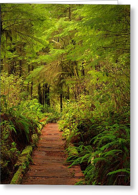 Quinualt Rain Forest Path Greeting Card by Leland D Howard
