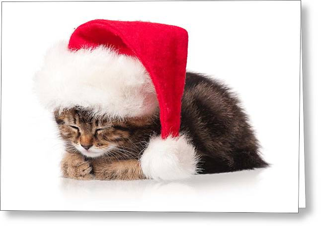 Cute Christmas Cat Greeting Card by Doc Braham