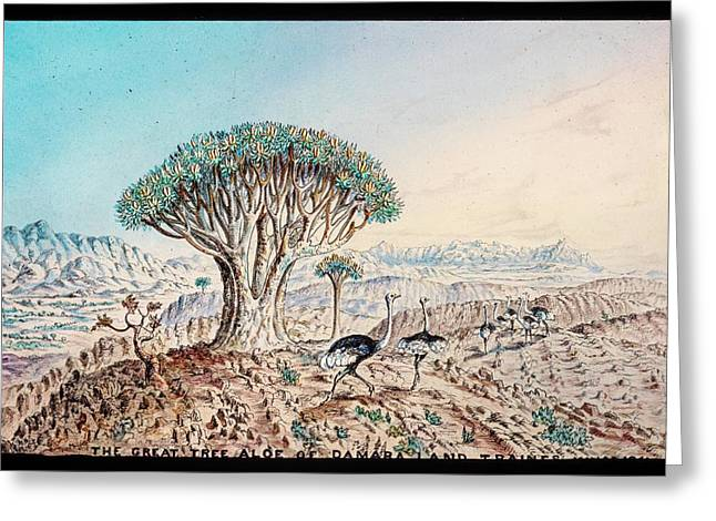 Quiver Tree And Ostriches Greeting Card