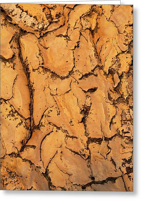 Quiver Tree Bark Greeting Card by Tony Camacho