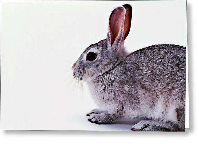 Rabbit 1 Greeting Card by Lanjee Chee