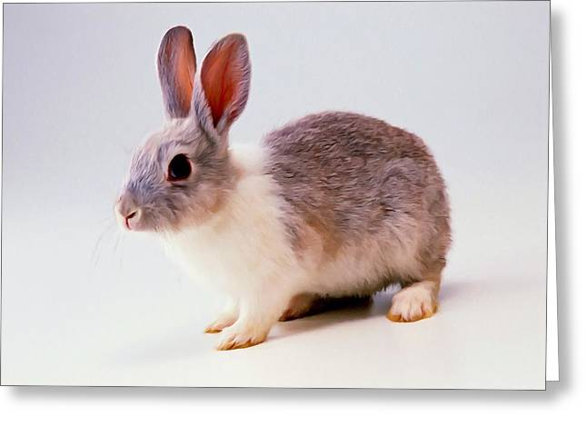Rabbit 2 Greeting Card by Lanjee Chee