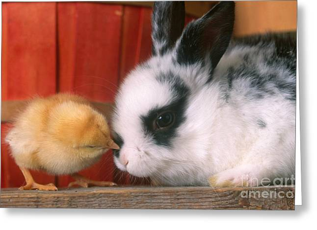 Rabbit And Chick Greeting Card