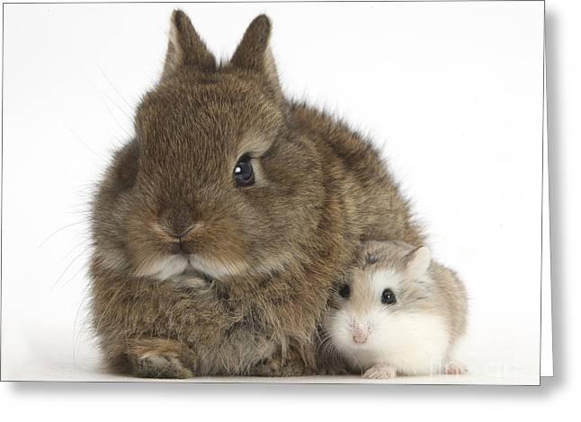 Rabbit And Roborovski Hamster Greeting Card by Mark Taylor