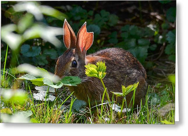 Rabbit Ears Greeting Card