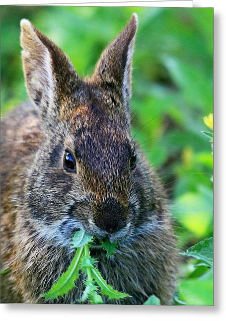 Rabbit Food Greeting Card