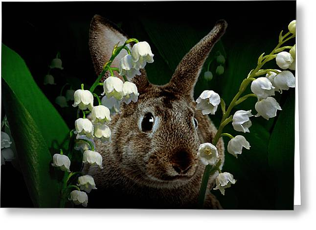 Rabbit In The Lilies Greeting Card
