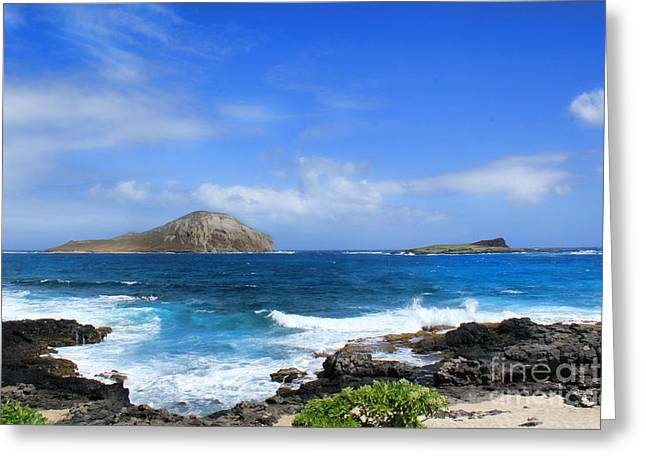 Rabbit Manana Island Oahu Hawaii Greeting Card by Leslie Kirk