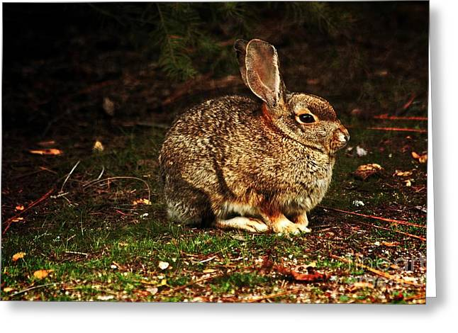 Greeting Card featuring the photograph Rabbit  by Marjorie Imbeau