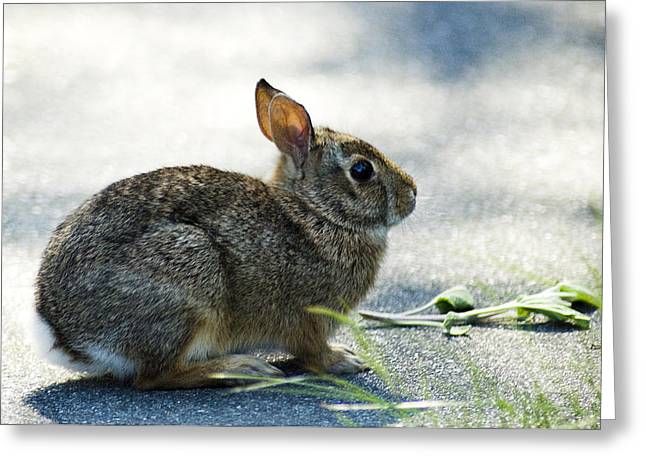 Greeting Card featuring the photograph Rabbit by Yulia Kazansky
