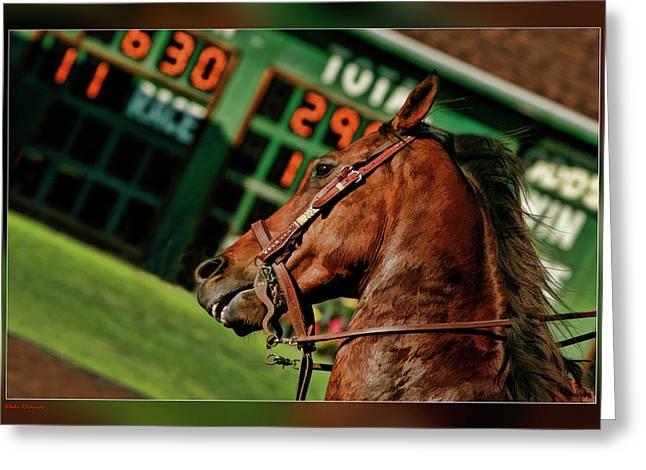 Race Horse Head Shot Greeting Card by Blake Richards