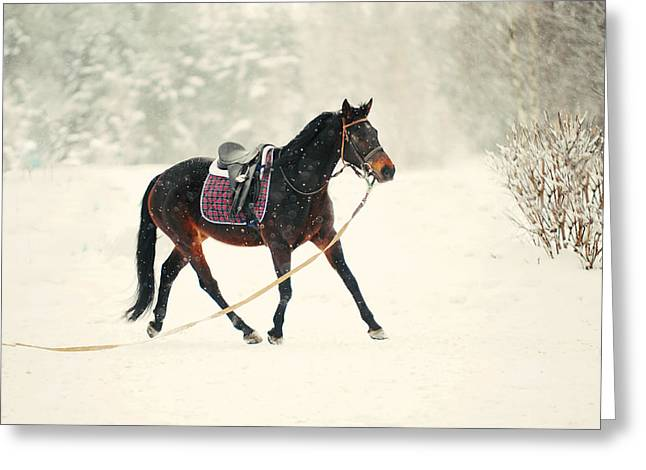 Race In The Snow 6 Greeting Card