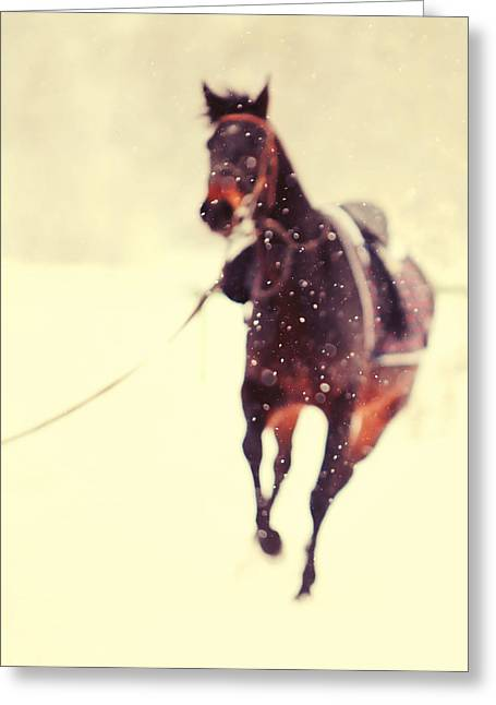 Race In The Snow Greeting Card by Jenny Rainbow