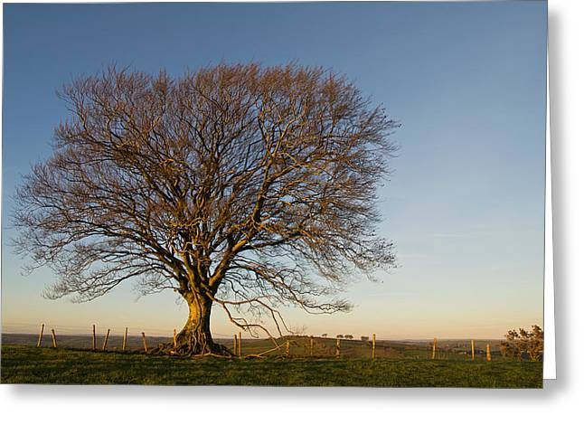 Raddon Hill Top Tree Greeting Card