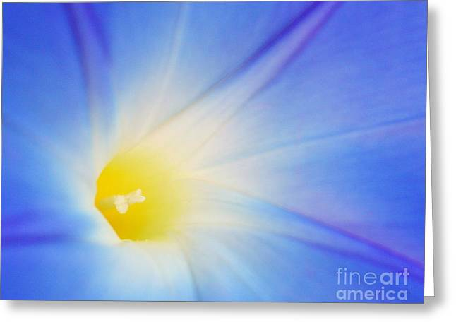 Radiance Greeting Card by Raena Wilson