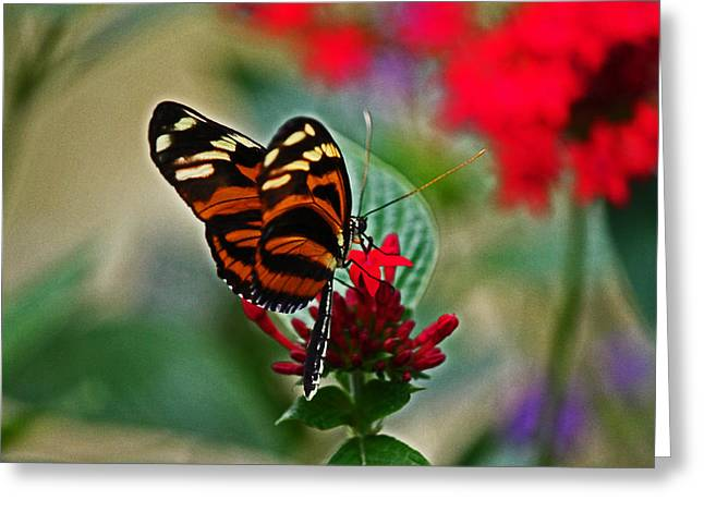 Radiant Butterfly Greeting Card
