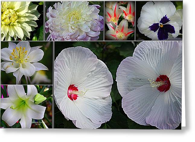 Radiant In White Greeting Card by Dora Sofia Caputo Photographic Art and Design