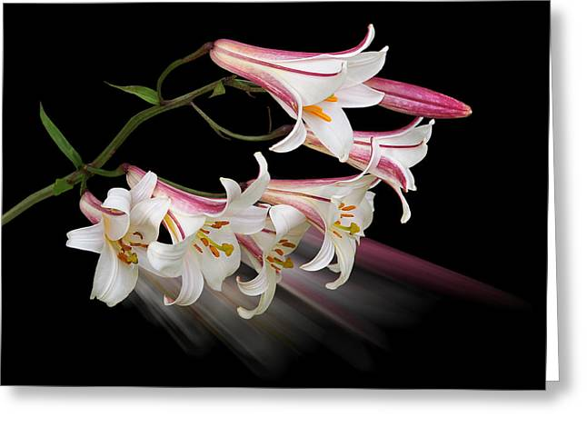 Radiant Lilies Greeting Card