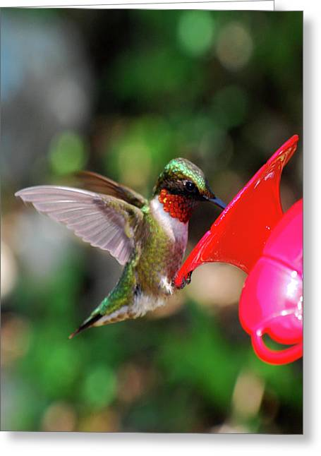 Radiant Ruby Greeting Card by Lori Tambakis