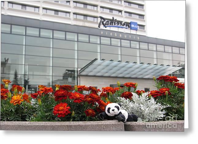 Radisson Blu Lietuva. Baby Panda Likes It Greeting Card by Ausra Huntington nee Paulauskaite
