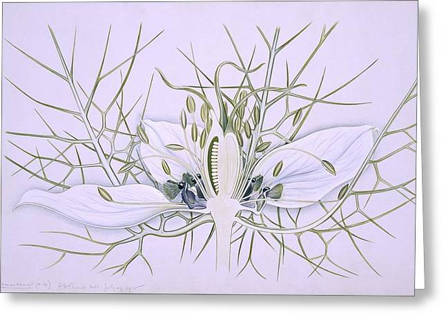 Ragged Lady Flower, 20th Century Greeting Card