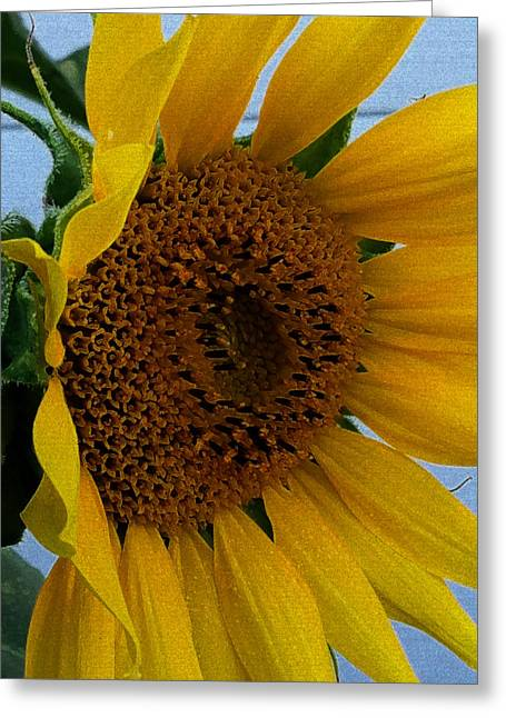 Rahab's Sunflower Greeting Card by Jeff Iverson