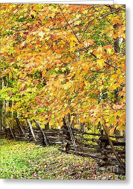 Rail Fence Fall Color Greeting Card by Thomas R Fletcher