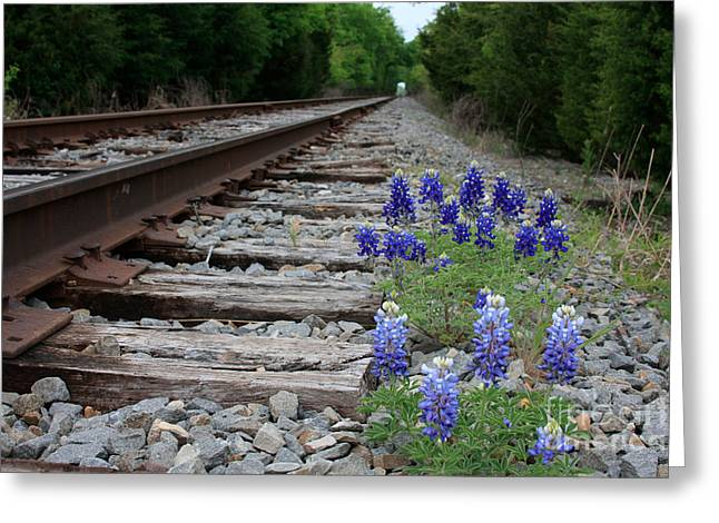 Railroad Bluebonnets Greeting Card by Jerry Bunger