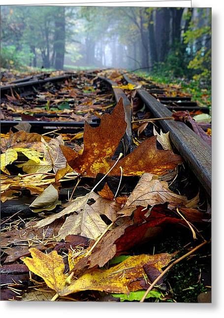 Rails And Leaves Greeting Card