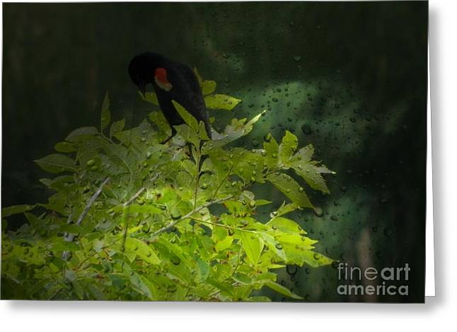 Rain And The Red Wing Blackbird Greeting Card