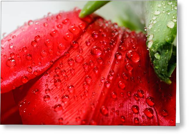 Rain Drops Greeting Card by Ivelin Donchev
