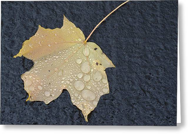 Rain Drops On A Yellow Maple Leaf Greeting Card