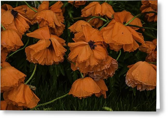 Rain Flowers Greeting Card
