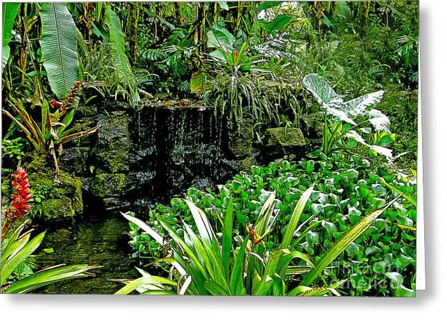 Rain Forest Beauty At Mindo Ecuador Greeting Card by Al Bourassa