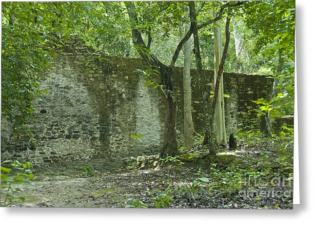Rain Forest Jungle And Ruins At Calakmul Greeting Card by Ellen Thane