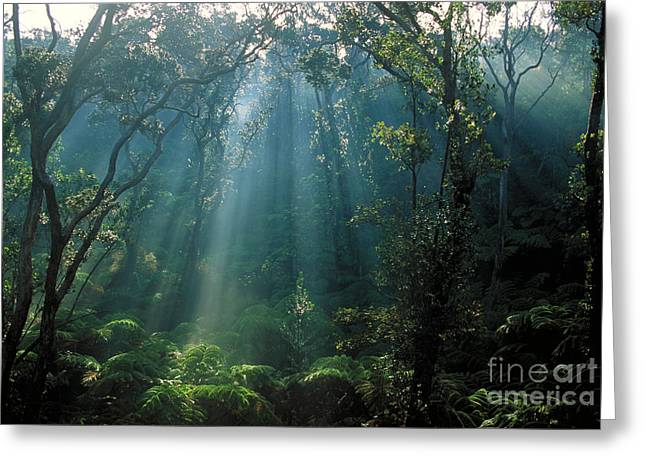 Rain Forest Of Tree Ferns Greeting Card by Gregory G. Dimijian