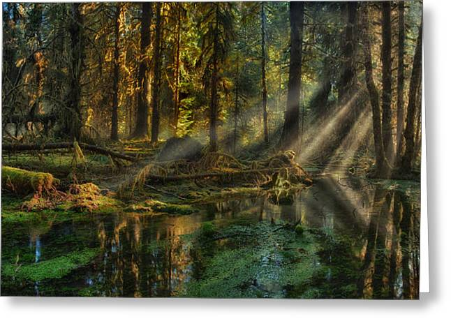 Rain Forest Sunbeams Greeting Card by Mary Jo Allen